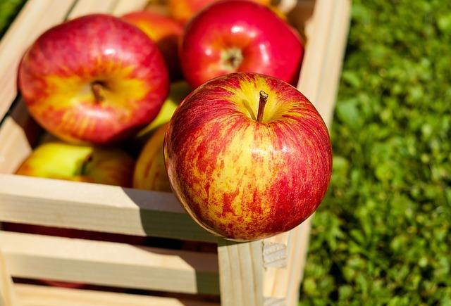 Długoterminowe przechowywanie warzyw