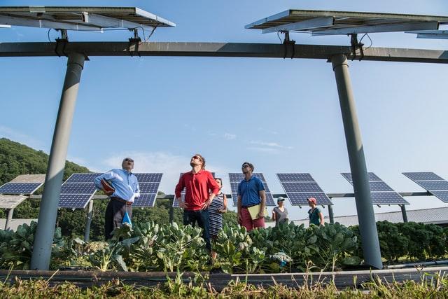 Co wziąć pod uwagę decydując się na montaż paneli słonecznych?